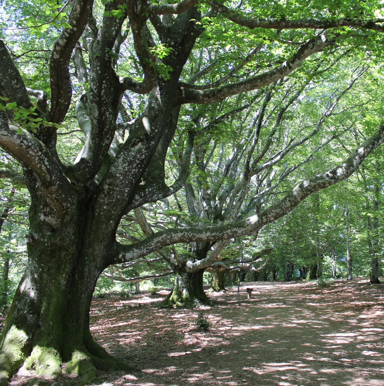 Le Mont Gargan | La Maison de l'Arbre et de la Nature, Chamberet