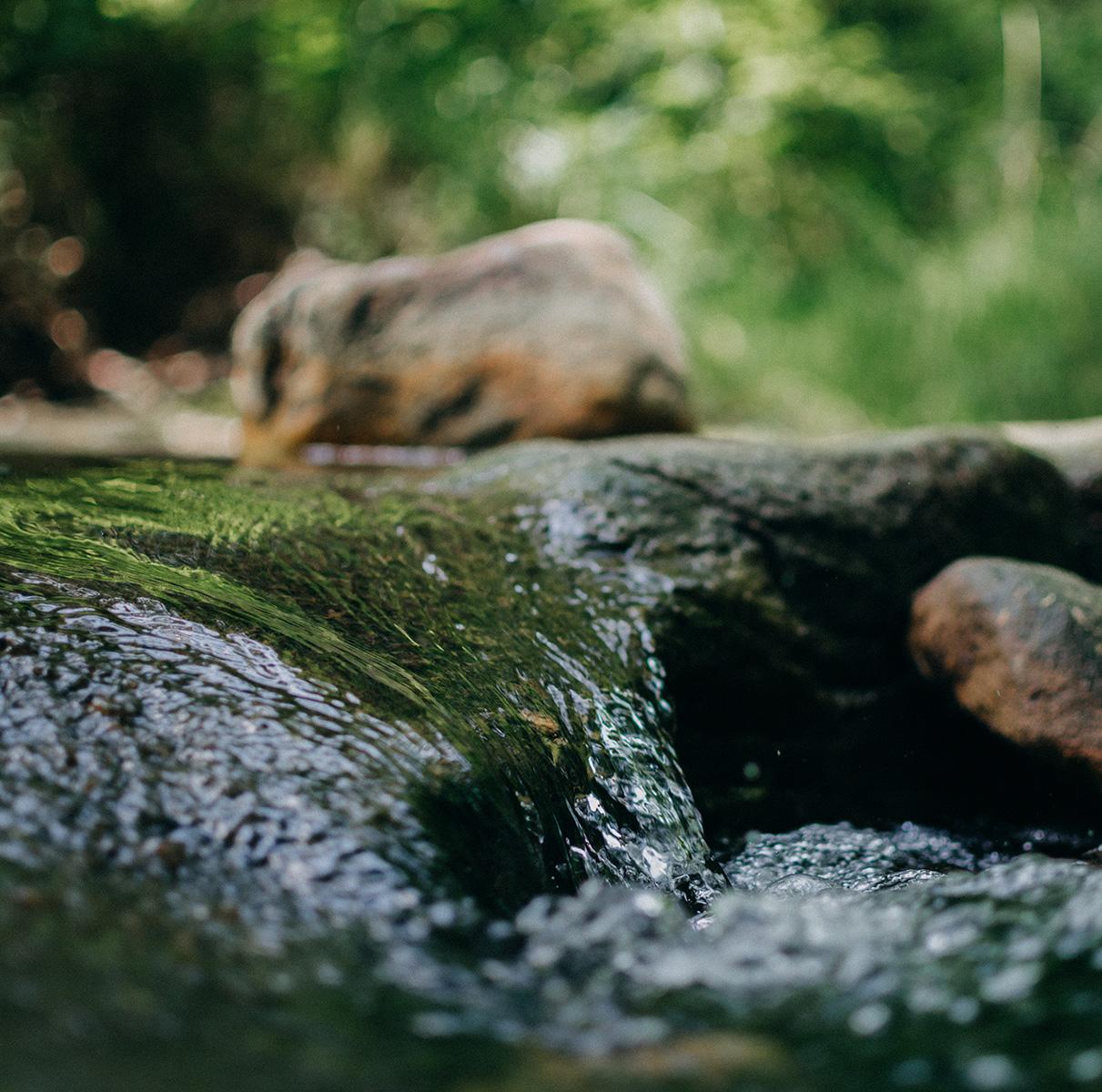 Les Milles Sources | La Maison de l'Arbre et de la Nature